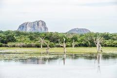 Lago in parco nazionale Yala, Sri Lanka Immagine Stock Libera da Diritti