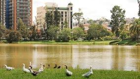 Lago park fotografía de archivo