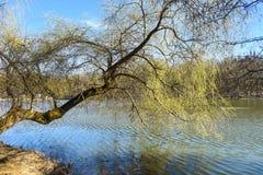 Lago park com reflex?es bonitas no tempo de mola imagens de stock