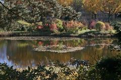 Lago park em cores da queda Fotos de Stock
