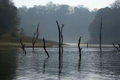 Lago, parque nacional de Periyar, Kerala, la India foto de archivo libre de regalías