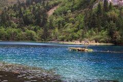 Lago peacock fotografia stock libera da diritti