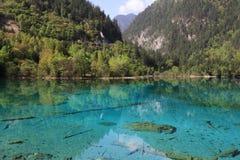 Lago peacock fotografie stock libere da diritti