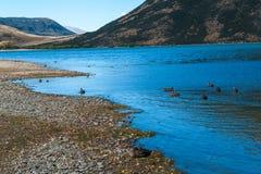 Lago Pearson/reserva natural de Moana Rua situada em Craigieburn Forest Park na região de Canterbury, ilha sul de Nova Zelândia Fotos de Stock Royalty Free