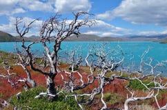 Lago Pehoe Stockbilder