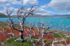 Lago Pehoe Στοκ Εικόνες