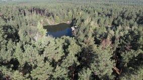 Lago pequeno cercado pela floresta do pinho, voo sobre o lago com as rochas na floresta filme