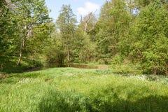 Lago pequeno na floresta Imagem de Stock
