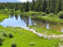 Lago pequeno perto da borda da floresta Foto de Stock