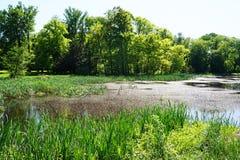 lago pequeno perto do castelo de Radun imagens de stock