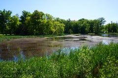 lago pequeno perto do castelo de Radun fotografia de stock royalty free