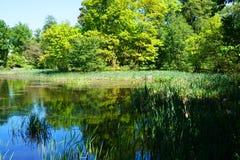 lago pequeno perto do castelo de Radun imagem de stock royalty free