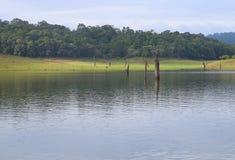 Lago Periyar por completo del agua, Thekkady, Kerala, la India fotografía de archivo