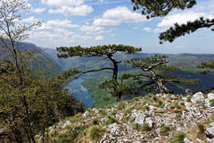 Lago Perucac, ponto de vista Banjska Stena, montanha Tara, Sérvia ocidental Imagem de Stock