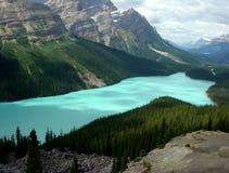Lago Peyto Fotos de archivo libres de regalías