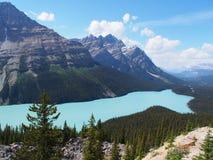 Lago Peyto a Jasper National Park Fotografia Stock Libera da Diritti