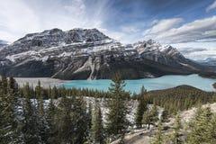 Lago Peyto panorámico Fotos de archivo libres de regalías