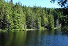 Lago pine no início do verão na montanha de Chuckanut Foto de Stock