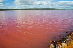 Lago pink de la laguna de Hutt fotos de archivo libres de regalías