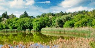 Lago pintoresco, bosque del verano en los bancos y cielo Foto ancha fotos de archivo libres de regalías
