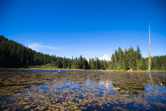 Lago pintoresco Trillium con los lirios de agua y la montaña nevosa Foto de archivo libre de regalías