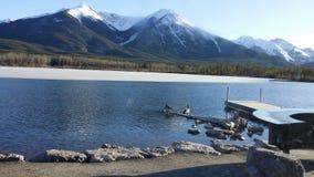 Lago, plataforma, montanhas, gansos, log, água, reflexão, imagens de stock