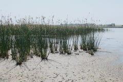 Lago próximo pelo mar Fotografia de Stock Royalty Free