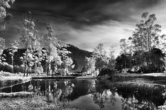 Lago precioso por la mañana Fotografía de archivo