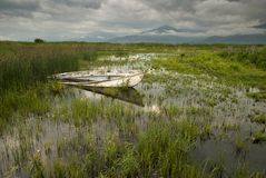 Il lago Prespa in Grecia Fotografia Stock Libera da Diritti