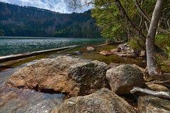 Lago preto glacial cercado pela floresta Fotos de Stock Royalty Free