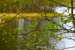 Lago in primavera Immagine Stock Libera da Diritti