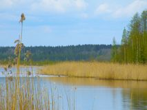 Lago in primavera Immagine Stock