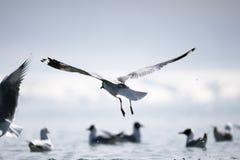 Lago Qinghai Fotografía de archivo libre de regalías