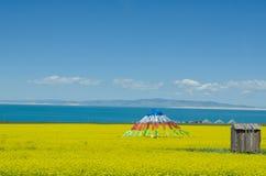 Lago Qinghai y flor de la violación Foto de archivo libre de regalías