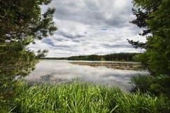Lago quieto da floresta com folha na superfície da água Fotografia de Stock