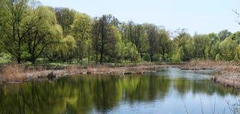Lago quieto na restauração da floresta das árvores na água Fotografia de Stock Royalty Free