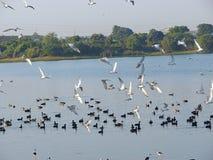 Lago Randarda, Rajkot, Gujarat Foto de archivo libre de regalías