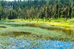 Lago raso Fotografia de Stock