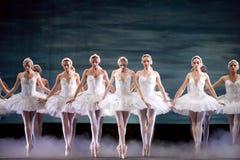 Lago real ruso swan del perfome del ballet Fotografía de archivo