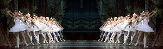 Lago real ruso swan del perfome del ballet imagen de archivo