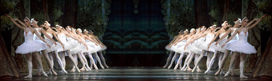 Lago reale russo swan del perfome di balletto Immagine Stock