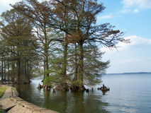 Lago Reelfoot Fotografía de archivo libre de regalías