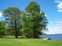Lago Reelfoot Immagini Stock
