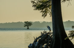 Lago Reelfoot, Tennessee State Park Fotografie Stock Libere da Diritti