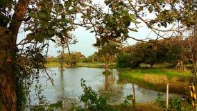 Lago rice Fotografia Stock Libera da Diritti