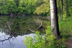 Lago rice Foto de archivo libre de regalías