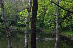 Lago rice fotografía de archivo libre de regalías