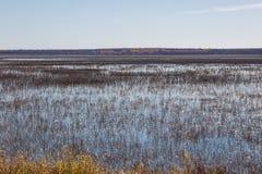 Lago rice en otoño Fotografía de archivo