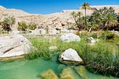Lago, rio e grama nos oásis do deserto - Omã Fotos de Stock Royalty Free