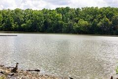 Lago river Fotografie Stock Libere da Diritti